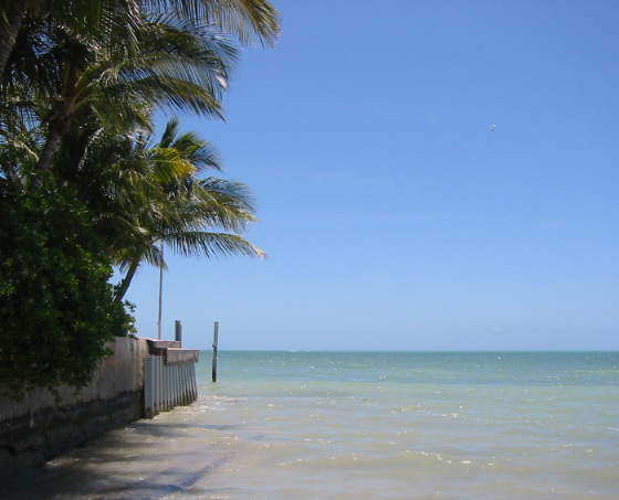 Key West Ocean and Palm Trees by Wall